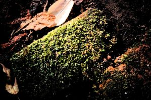 brick and moss. by StillSouthern