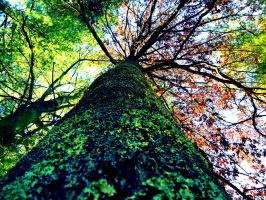 Barking Up The Autumn Tree by trippietimes