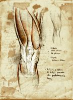 Anatomy practice thigh knee by SILENTJUSTICE