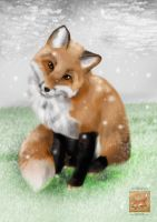 Fox in Snow by KareSilver