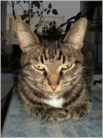 Sleepy monster by DanaAnderson