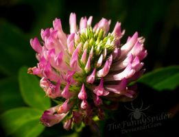 Clover Flower by TheFunnySpider