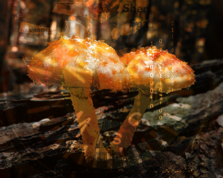 The Mushrooms by Grobsch