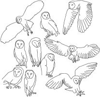 Owl Study - Illustrator by Triever