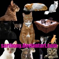 Cats by sarthony