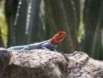 Hot and Cold Lizard by Hollowcyclone