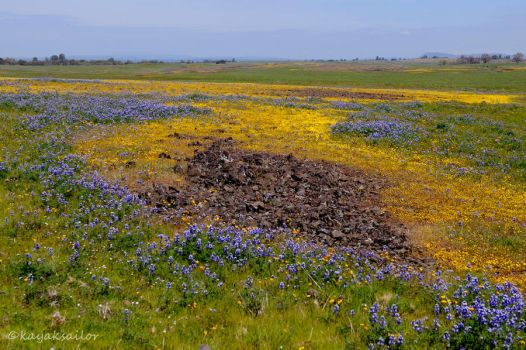 rivers of flowers by kayaksailor