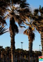 palms at the coast by mominomi