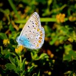love stings like a butterfly by 1411