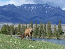 Elk and Mountains by ByronGiant