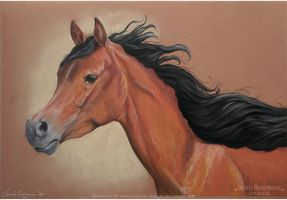 Young Arabian Horse - Pastel by BLACKNIGHTINGALE81