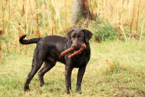Choc Lab stock 3 by shaenne-stock