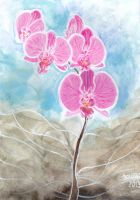 Romantic orchid by Littlefrenchshrimp