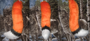 three tone fox/canine tail for sale by HVC333