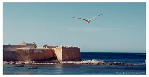 Flying seagull by klapouch