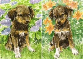 Puppies in the Garden ACEOs by Pannya