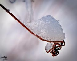 Vine tendril of ice by madlynx