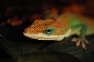 Anole II by theonlysong