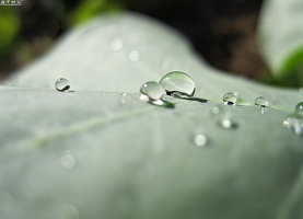 Water Droplets by OneofakindKnight