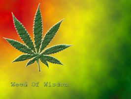 Weed Of Wisdom V2 by Club-Marijuana