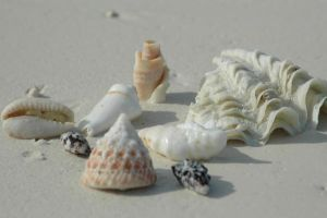 Sea shells 2 by CosmicStock