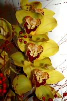 orchid by m-gosia