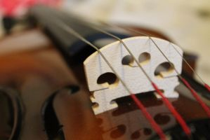 Violin by TelescopicLenses