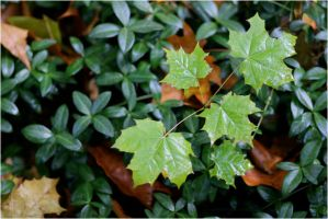 Leaves and Ivy II by diamondscan