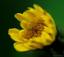 Yellow! by Barbarafm