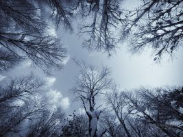 In The Snowy Birch Forest by Nitrok