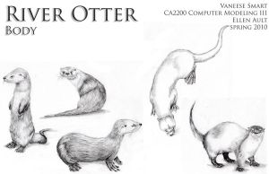 River Otter Body Drawing Ref by Vinnie14