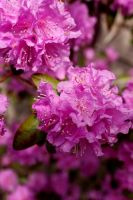 Purple flowers by ClaireErdal