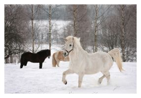 A white fairytale by Caoshica