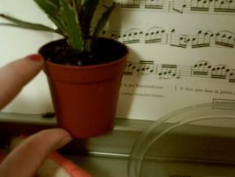 my little pot plant 2 by Ted-The-Fish