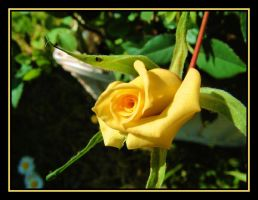 Yellow Rose by Pjharps