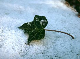 Pretentious Leaf In Snow by NobbyWAGD