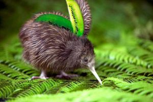 Kiwi Fruit by immacookie