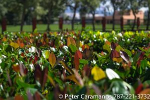 Leaves by Caramanos2000