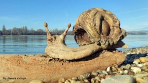 Driftwood art-snail in Hungary by Tamas Kanya by tom-tom1969