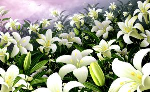 i love white lilies you like? by sheroshah