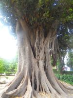 Enormous tree by The-Insignificant
