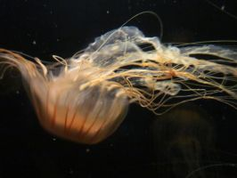 Jellyfish by FiresFlame