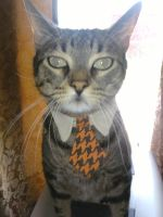 Mr.Mugen My awesome cat by Zeth-09