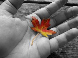 Holding Autumn by Michies-Photographyy