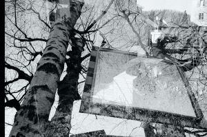 Film - XXV - mirror tree by Picture-Bandit