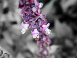 Hint of Purple by JayLPhotography