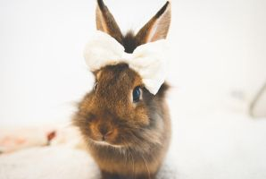 Ella The Bunny - Mini Fashion Show! by jamiedenton