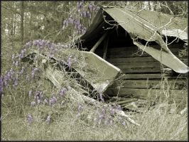 Wysteria and Old Home by masonmouse