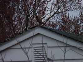 Bird on the roof by LW-Lucy