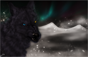 Wolf's Rain .:Darcia II:. by WhiteSpiritWolf
